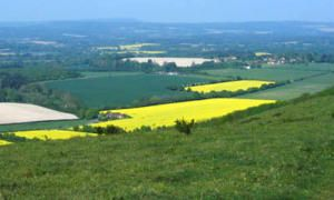 yellow-fields-cropped